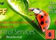 No1 pest control service in chennai