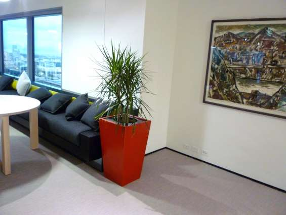 Office plants meblourne | foliage indoor plant hire