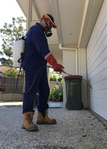 Termite treatment - best services provider