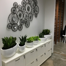 Indoor plants for offices | foliage indoor plant hire