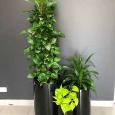 Corporate office plant   foliage indoor plant hire