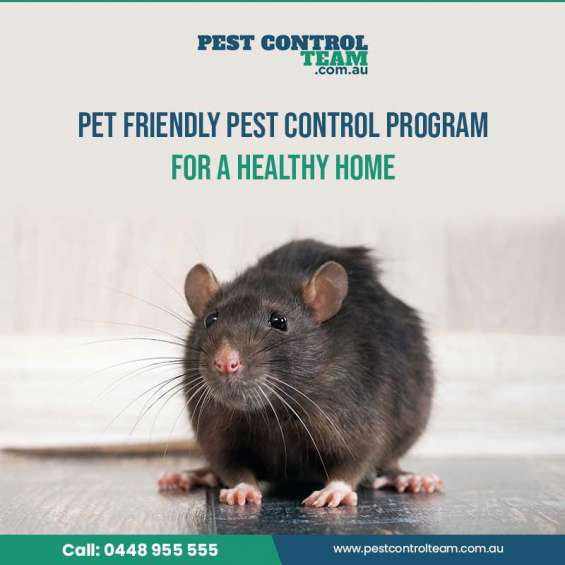 Looking for best pet friendly pest control program for a healthy home?